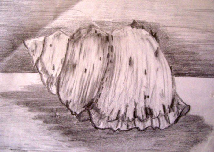 stilleven schelp
